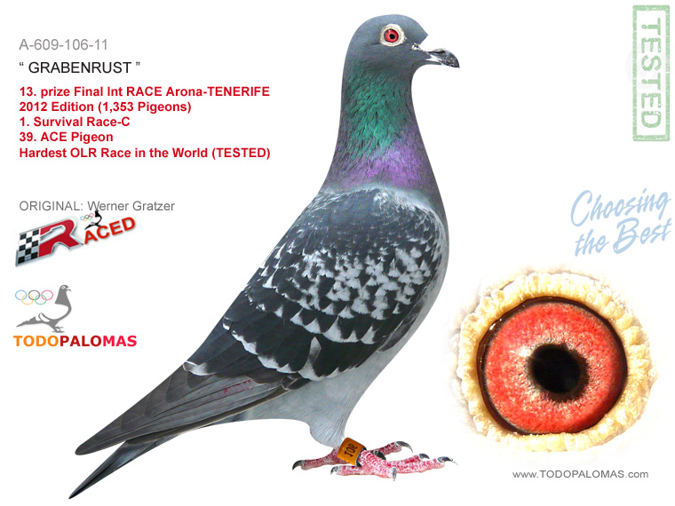 13. prize Final Int RACE Arona-TENERIFE 2012 Edition (1,353 Pigeons) and 1st Survival Race-C - Hardest OLR Race in the World (TESTED)