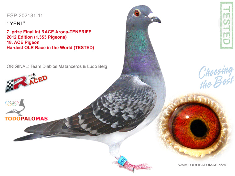 7. prize Final Int RACE Arona-TENERIFE 2012 Edition (1,353 Pigeons) - Hardest OLR Race in the World (TESTED)