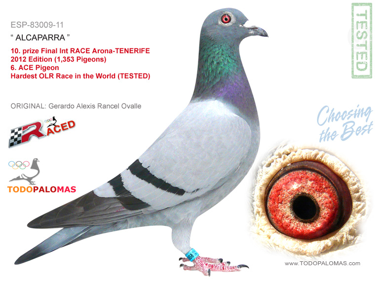 10. prize Final Int RACE Arona-TENERIFE 2012 Edition (1,353 Pigeons) - Hardest OLR Race in the World (TESTED)