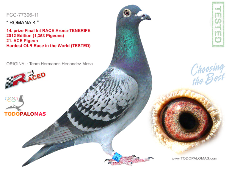 14. prize Final Int RACE Arona-TENERIFE 2012 Edition (1,353 Pigeons) - Hardest OLR Race in the World (TESTED)