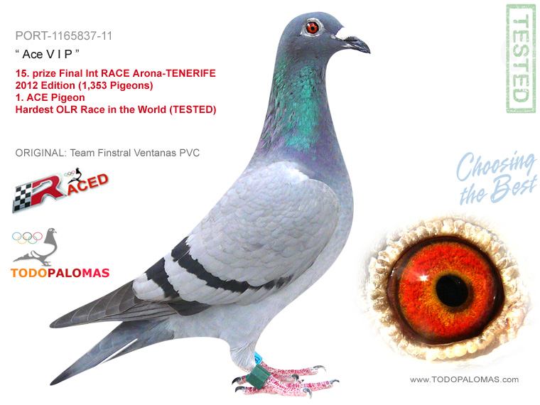15. prize Final Int RACE Arona-TENERIFE 2012 Edition (1,353 Pigeons) and ACE Pigeon - Hardest OLR Race in the World (TESTED)