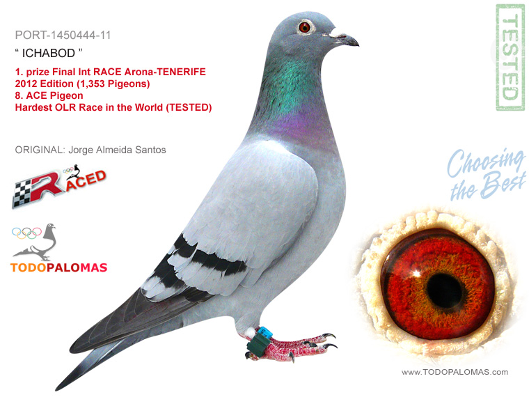 1. prize Final Int RACE Arona-TENERIFE 2012 Edition (1,353 Pigeons) - Hardest OLR Race in the World (TESTED)