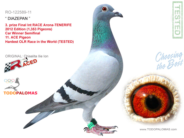 3. prize Final Int RACE Arona-TENERIFE 2012 Edition (1,353 Pigeons)  Car Winner Semifinal - Hardest OLR Race in the World (TESTED)